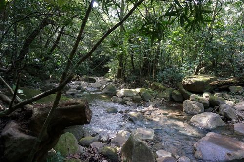Sendero Rincon de la Vieja - Costa Rica