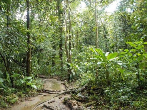 Sendero en el Parque Nacional de Corcovado