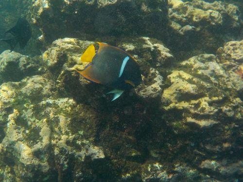 Snorkel, Isla del Caño - Costa Rica