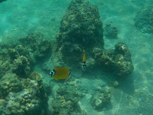 Snorkel en Koh Tao | Tailandia
