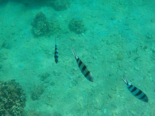 Snorkel Koh Tao - Thailand