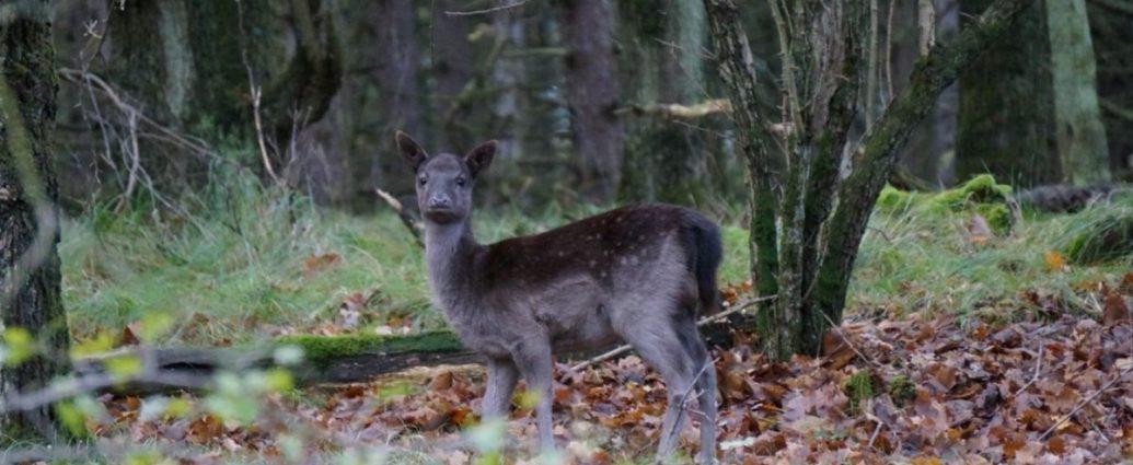 Hiking Amsterdam, deers | Senderismo Amsterdam, ciervos