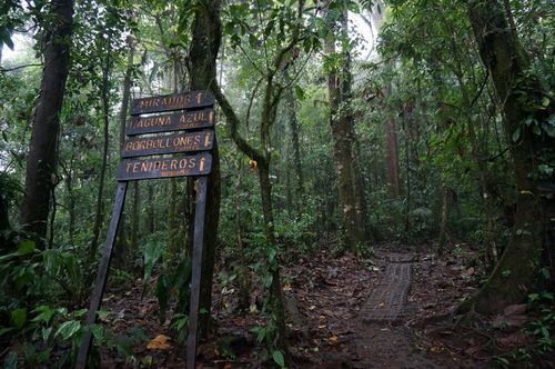 Sendero Río Celeste - Parque Nacional Volcán Tenorio, Costa Rica