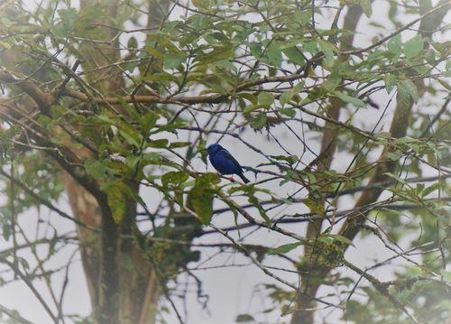 Pájaro - Costa Rica