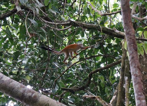 Mono ardilla | Visita al Parque Nacional de Manuel Antonio