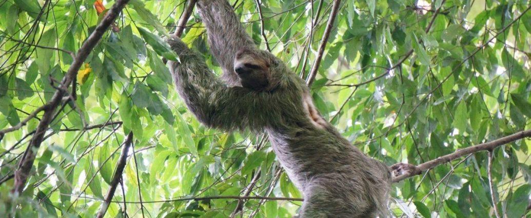 Visita el Parque Nacional Manuel Antonio y descubre su fauna