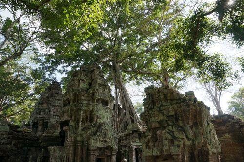 Ta Prohm | Cambodia