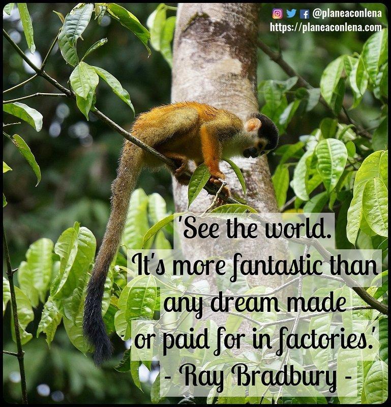 'Mira el mundo. Es más fantástico que cualquier sueño hecho o comprado en una fábrica.' - Ray Bradbury