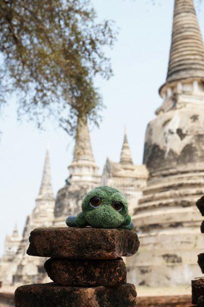 Tortuga en Ayutthaya, Tailandia