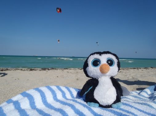 Pingüino en Miami