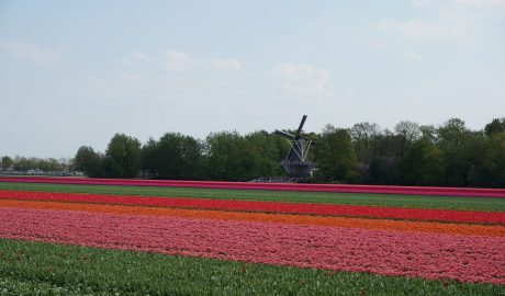 Tulips route by bike - The Netherlands | Tulipanes - Ruta en bicicleta, Países Bajos