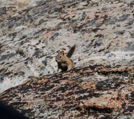 Ardilla en Mammoth Lakes | Lo mejor de la Costa Oeste
