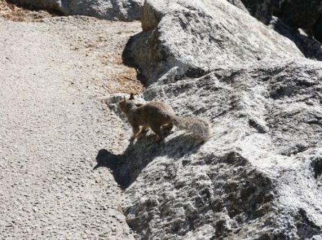 Ardilla en Yosemite | Lo mejor de la Costa Oeste