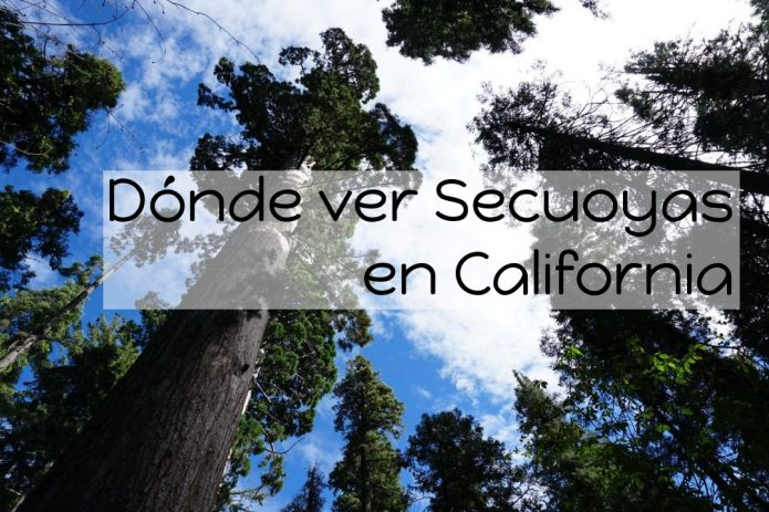 Dónde ver Secuoyas en California | Mariposa Grove