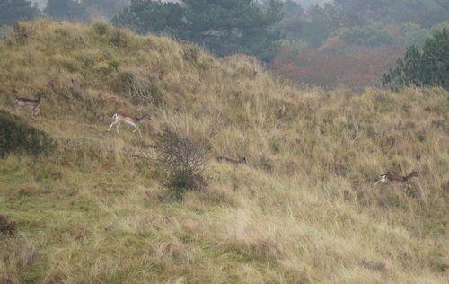 Deers | Senderismo por el National Park Zuid-Kennemerland