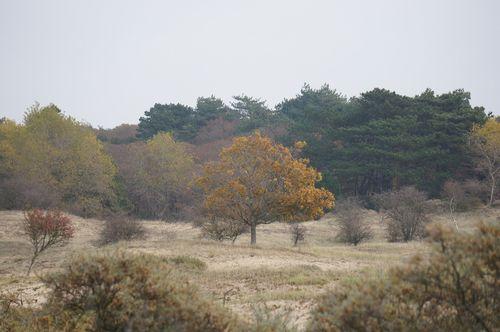 Hiking por el National Park Zuid-Kennemerland