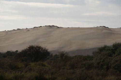 Dunes - Hiking por el National Park Zuid-Kennemerland