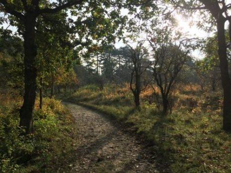 Senderismo por el National Park Zuid-Kennemerland
